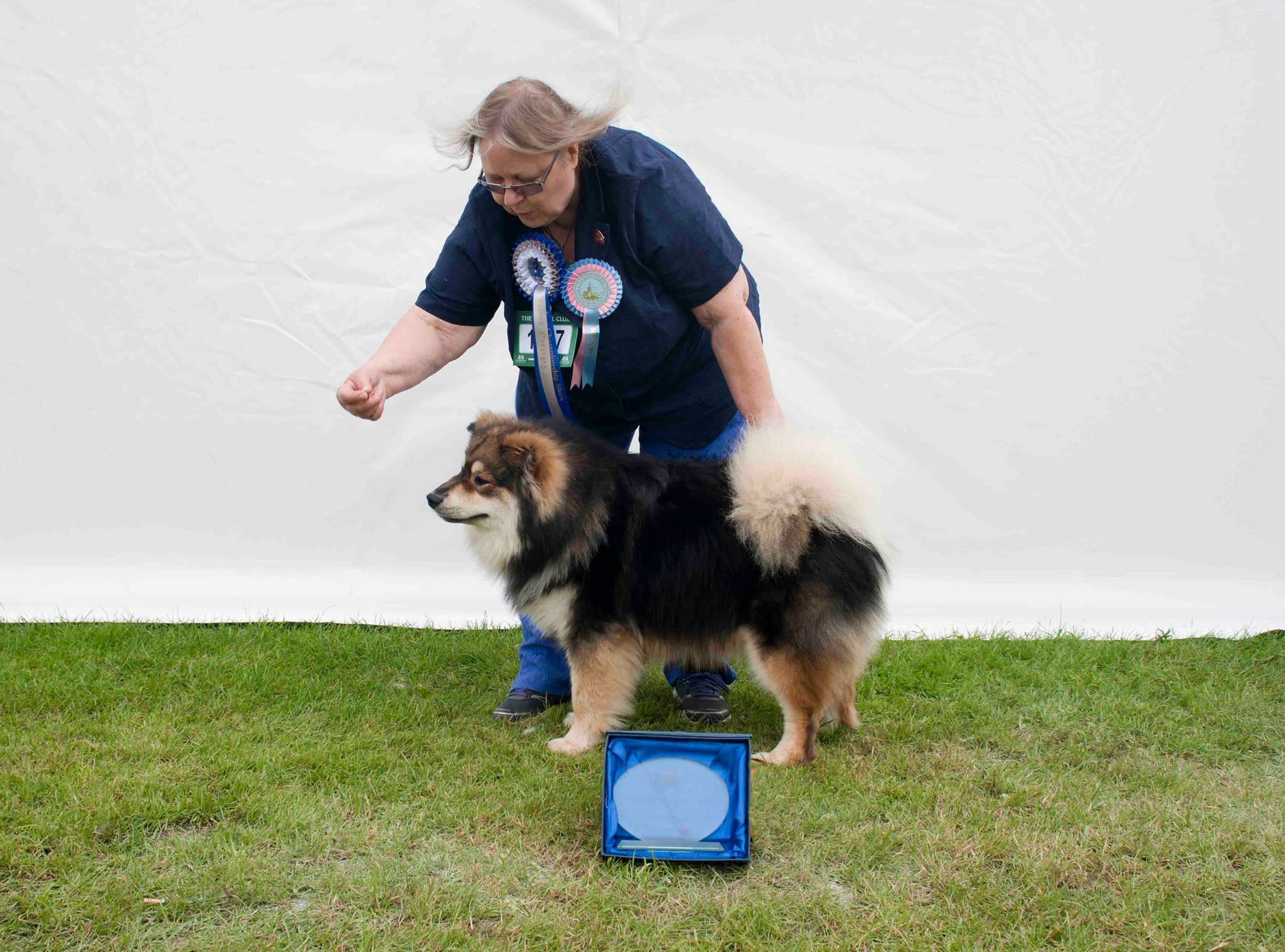 Where Is Windsor Championship Dog Show Held